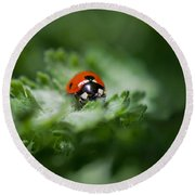 Ladybug On The Move Round Beach Towel