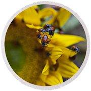 Ladybugs Close Up Round Beach Towel