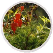 Round Beach Towel featuring the photograph Lantern Plant by Brenda Brown