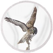 Lapland Owl On White Round Beach Towel by Mircea Costina Photography