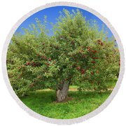 Large Apple Tree Round Beach Towel by Anthony Sacco