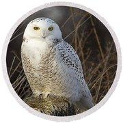 Late Season Snowy Owl Round Beach Towel