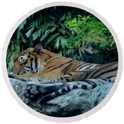 Round Beach Towel featuring the photograph Lazy Cat by Michelle Meenawong