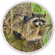 Lazy Day Raccoon Round Beach Towel by Jennie Marie Schell
