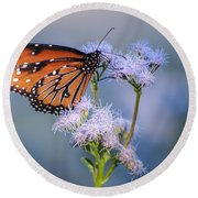 8x10 Metal - Queen Butterfly Round Beach Towel by Tam Ryan
