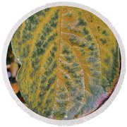 Leaf After Rain Round Beach Towel by Bill Owen
