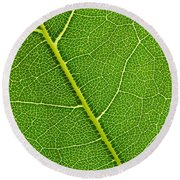 Leaf Detail Round Beach Towel by Carsten Reisinger