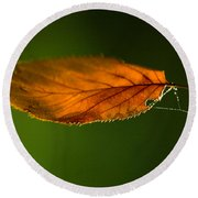 Leaf On Spiderwebstring Round Beach Towel