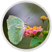 Lemon Emigrant Butterfly Round Beach Towel by Scott Carruthers