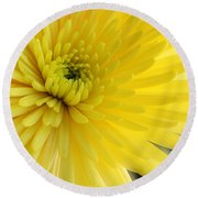 Round Beach Towel featuring the photograph Lemon Mum by The Art of Alice Terrill