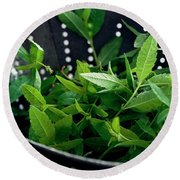 Lemon Verbena Herbs Round Beach Towel
