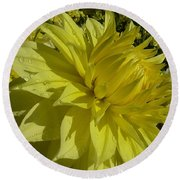 Lemon Yellow Dahlia  Round Beach Towel by Susan Garren