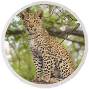Leopard Cub Gaze Round Beach Towel