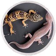Leopard Gecko E. Macularius Collection Round Beach Towel