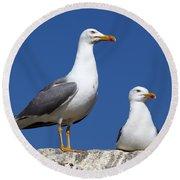 Lesser Black-backed Gulls Round Beach Towel