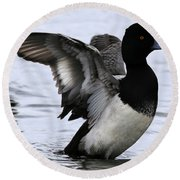 Lesser Scaup Duck  Round Beach Towel