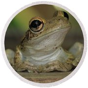 Let's Talk - Cuban Treefrog Round Beach Towel