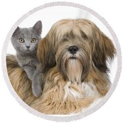 Lhasa Apso And Chartreux Kitten Round Beach Towel