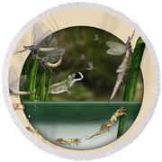 Life Cycle Of Mayfly Ephemera Danica - Mouche De Mai - Zyklus Eintagsfliege - Stock Illustration - Stock Image Round Beach Towel