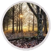 Light In The Trees Round Beach Towel