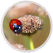 Lil Ladybug 2 Round Beach Towel by Sharon Talson