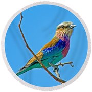 Lilac-breasted Roller In Kruger National Park-south Africa Round Beach Towel