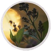 Lilacs At Sunset Round Beach Towel by Penny Meyers