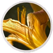 Lily In The Yard Round Beach Towel by Daniel Sheldon