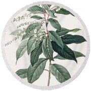 Lily Of The Valley Tree Round Beach Towel by Pierre Joseph Redoute