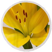 Lily Round Beach Towel by Scott Carruthers