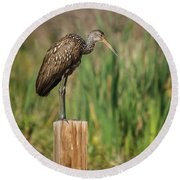 Limpkin Round Beach Towel by Jane Luxton