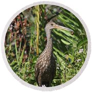 Round Beach Towel featuring the photograph Limpkin With An Apple Snail by Christiane Schulze Art And Photography