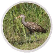 Round Beach Towel featuring the photograph Limpkin With Apple Snail by Christiane Schulze Art And Photography