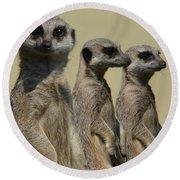 Line Dancing Meerkats Round Beach Towel by Paul Davenport