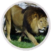 Lion 1 Round Beach Towel
