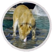 Lion 3 Round Beach Towel