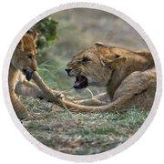 Lion Cub Biting Mother Round Beach Towel
