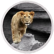 Lion Cub Round Beach Towel by Cathy Harper
