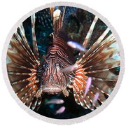 Round Beach Towel featuring the photograph Lion Fish - En Garde by Amy McDaniel