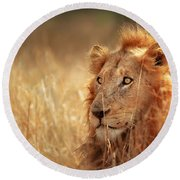 Lion In Grass Round Beach Towel