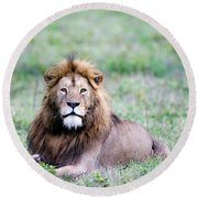 Lion Panthera Leo Relaxing In A Field Round Beach Towel