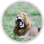 Lion Panthera Leo Yawning In A Field Round Beach Towel