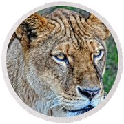 Lioness Deep In Thought Hdr Round Beach Towel