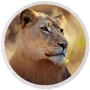 Lioness Portrait Lying In Grass Round Beach Towel
