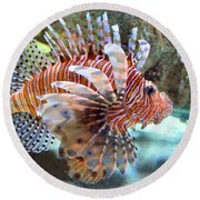 Lionfish Round Beach Towel by Sandi OReilly