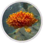 Liquid Rainbows - Chrysanthemum Blossom Floating In The Sunlight Round Beach Towel