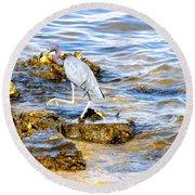 Little Blue Heron Round Beach Towel