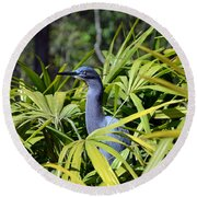 Round Beach Towel featuring the photograph Little Blue Heron by Robert Meanor
