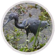 Round Beach Towel featuring the photograph Little Blue Heron - Waiting For Prey by Christiane Schulze Art And Photography
