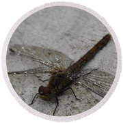 Little Dragonfly Round Beach Towel